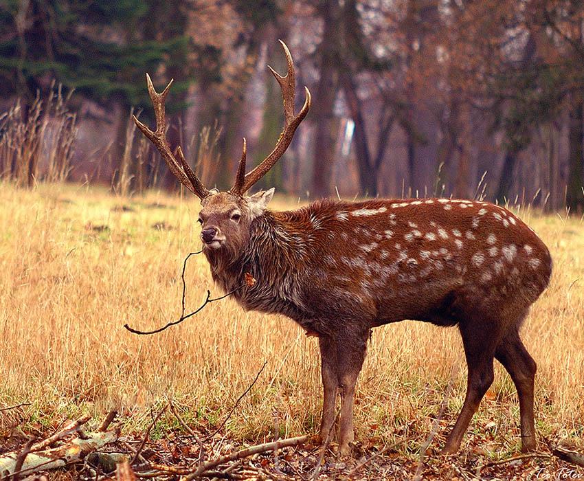 Wildlife photographer uk